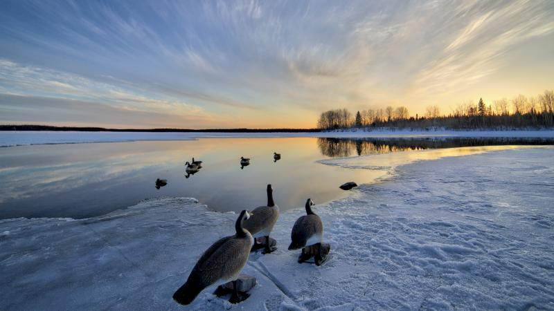 Goose decoys on a partially frozen lake near Mistissini Quebec at sunset.