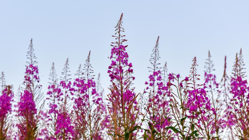 Photo of purple flowers against blue sky