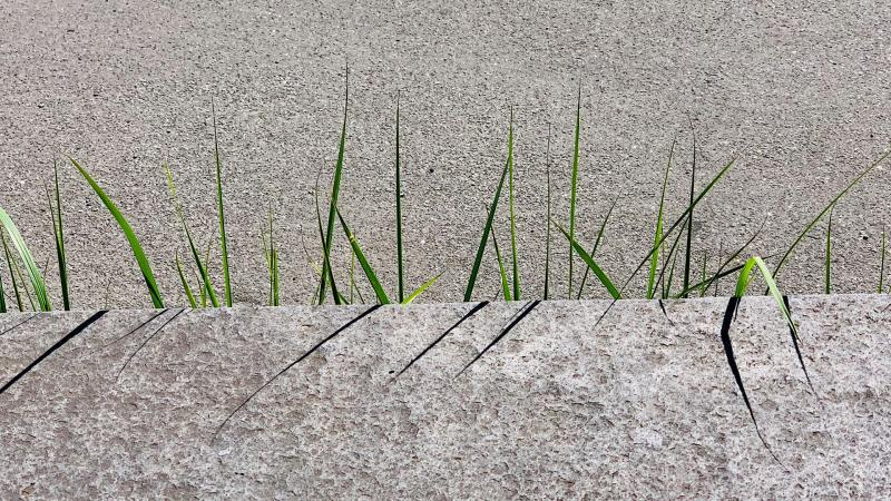 Green shoots rising up from concrete